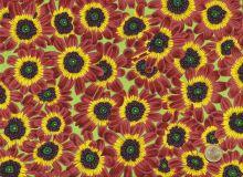 Free Spirit - Botanical Cineraria - Blüten orangerot