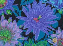 Philip Jacobs - Cactus Flower Cool