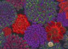 Philip Jacobs - Dark Dancing Dahlias